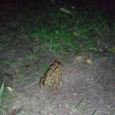 At first, we thought Dude the Toad didn't want us to take pictures of him